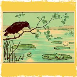 corvo rana